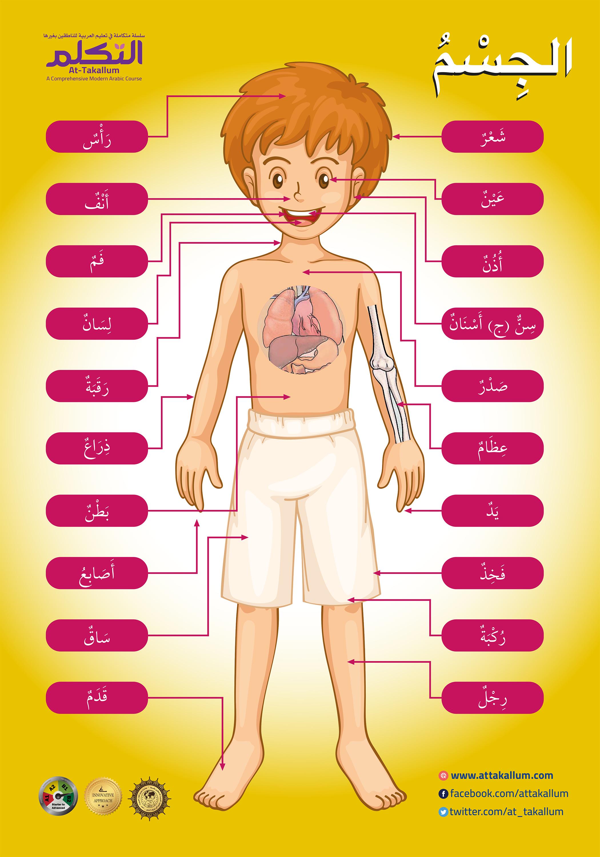 الجسم